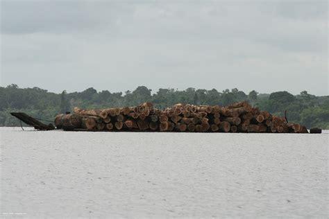 Tour della foresta pluviale del Congo: Trasporto del legno ...