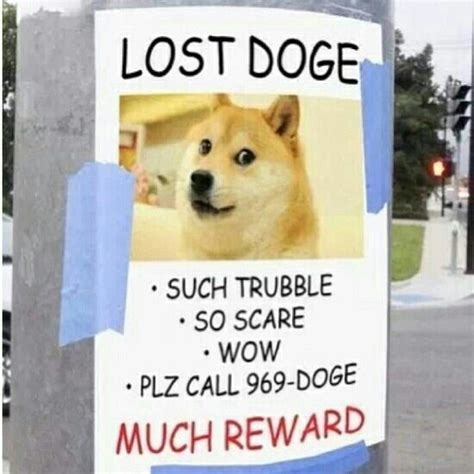 Such Dog Meme - 20 best doge images on pinterest colors dogs and funny things