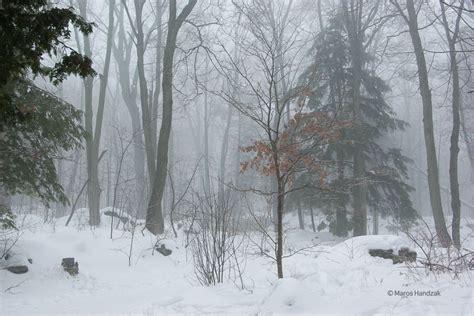 winter  ontario inspired  curiosity