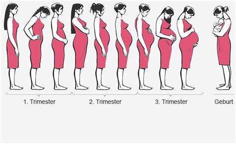 schwangerschaftswochen mamiwebde