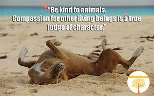 Quotes About Kindness To Animals. QuotesGram