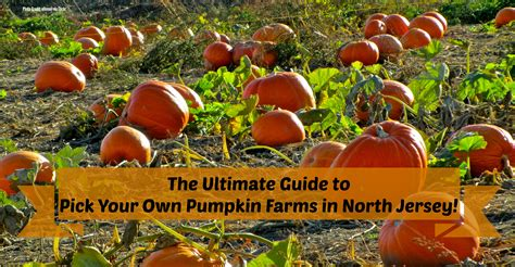 Pumpkin Patch Nj Chester by The Complete Guide To Pick Your Own Pumpkin Farms In North