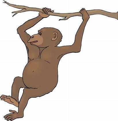 Monkey Clipart Hanging Chimpanzee Spider Clip Swinging