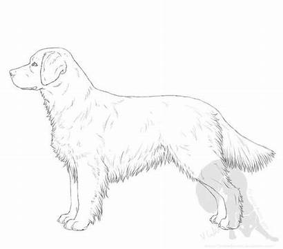 Retriever Golden Drawing Dog Drawings Line Draw