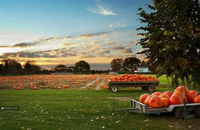 Pumpkin Field October Wallpapers Pumpkins Fall Scenes