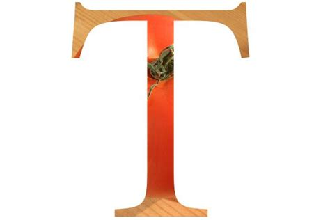 Letter T Pictures, Free Use Image, 2001-20-3 By Freefoto.com