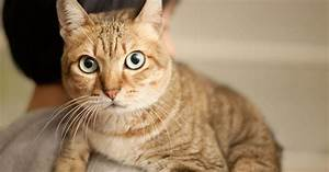 What Dry Food Does To Your Cat U0026 39 S Fur