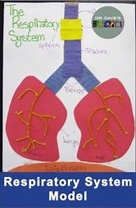 The 25  Best Respiratory System Ideas On Pinterest