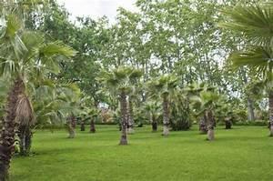Palmen Für Den Garten : palmen garten ~ Sanjose-hotels-ca.com Haus und Dekorationen