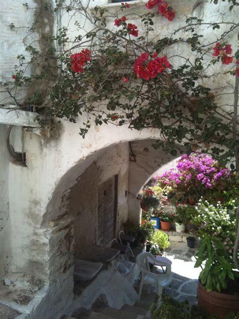 cecilia fox flowers  gracious gardens  greece