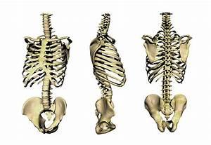 Human Skeleton Anatomy, Artwork Photograph by Victor ...