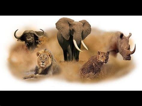 African Safari Animals Wildlife African Safari