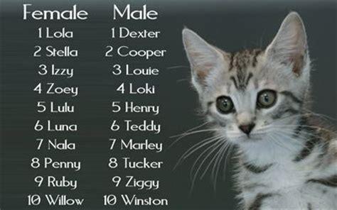ideas  female rabbit names  pinterest