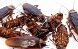 Tuer Les Cafards : produits anti cafards les cafards ~ Melissatoandfro.com Idées de Décoration