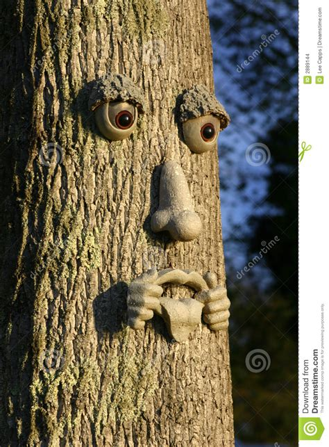 tree man stock images image