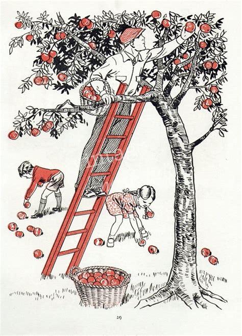apple orchard illustration 17 best ideas about apple illustration on