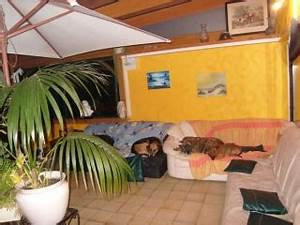 Hotel Pour Chien : pas envie de mettre m dor au chenil pr f rez l h tel ~ Nature-et-papiers.com Idées de Décoration