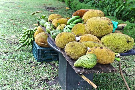 cours de cuisine crue le jacque ou ti jaque un fruit apprécié dans la cuisine