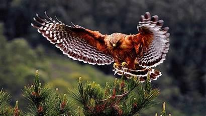 Birds Bird Wild Exotic Wings Animal Hawk