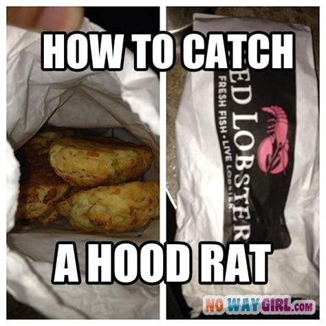 Hood Rat Meme - funny cheddar and cas on pinterest