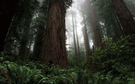 Redwood Desktop Wallpapers