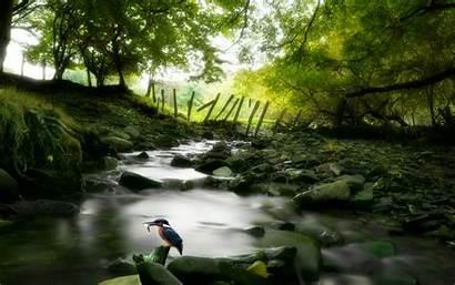 Stream Forest Nature Desktop Wallpapersafari Stage