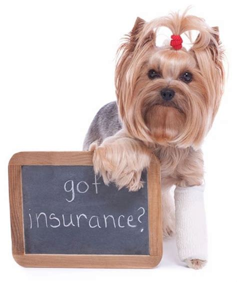 Check on the status of your complaint add new documents to support your complaint Pet Insurance   Az 101 Insurance