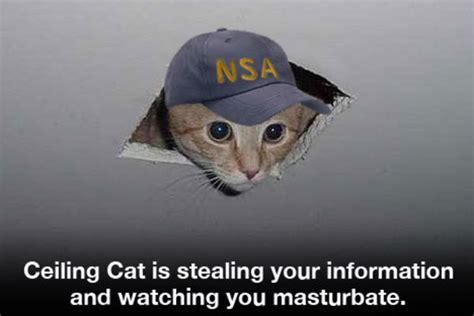 Ceiling Cat Meme - nsa cat ceiling cat know your meme