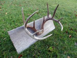 How to Mount Deer Antler Sheds