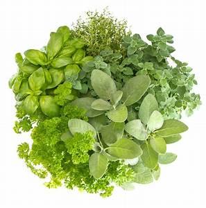 Herbes Aromatiques En Pot : les aromatiques indispensables dans mon jardin ~ Premium-room.com Idées de Décoration