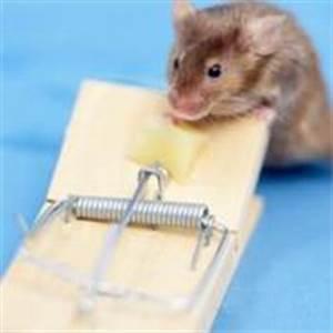 Comment Attraper Une Souris : attraper une souris ~ Dailycaller-alerts.com Idées de Décoration