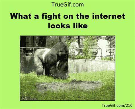 Internet Fight Meme - meme gif find share on giphy