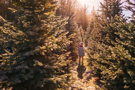 Christmas Tree Farms In Pittsburgh And Sw Pennsylvania