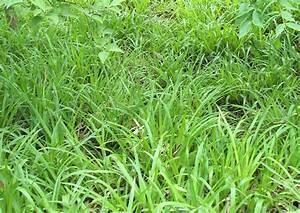 Pflanzen Im Mai : pflanzenbilder luzula sylvatica waldmarpel wald hainsimse im mai bodendecker landschaftsbau ~ Buech-reservation.com Haus und Dekorationen