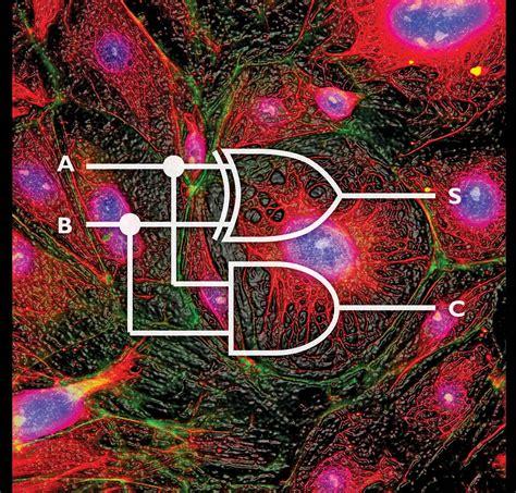 Systems biology   Britannica