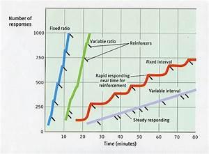 njyloolus: schedules of reinforcement