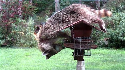 raccoon proof bird feeder unique bird feeder