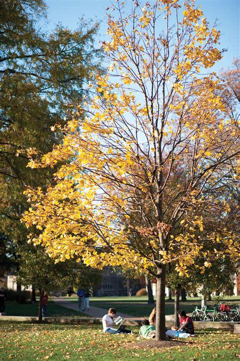 wu recognized  tree upkeep student life