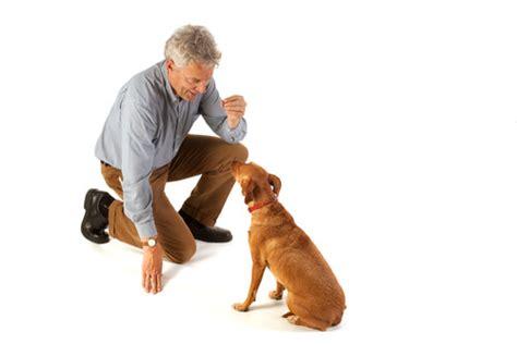 dog trainer         dog