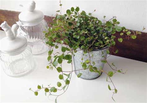 Pflanzen Für Katzen Geeignet by Katzenpflanzen F 252 R Katzen Geeignete Pflanzen Sorgen F 252 R