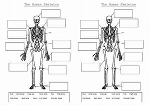 The Skeleton And Muscles Powerpoint And Worksheets By Hilly577 - Teaching Resources