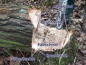 Baum Fällen Technik : baumf llarbeiten im heimischen garten ~ A.2002-acura-tl-radio.info Haus und Dekorationen