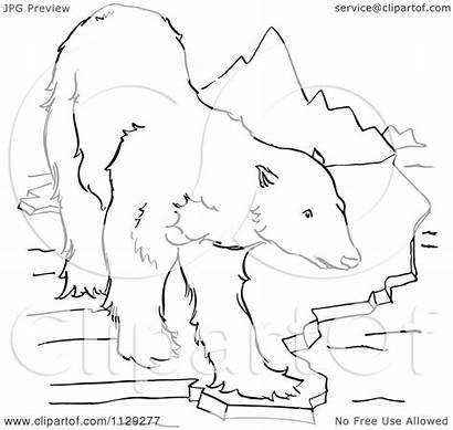 Bear Polar Mountains Ice Cartoon Clipart Coloring
