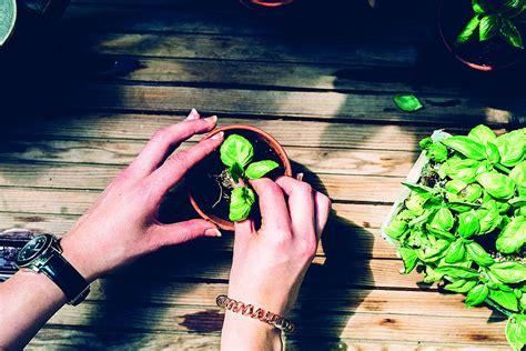 Botanischer Garten Graz Veranstaltungen by Pflanzenvermehrung Im K 252 Chen Garten Veranstaltungen Der Uni
