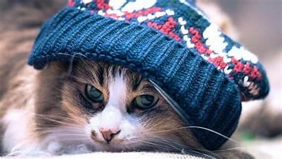 Hat Cat Animals Woolly Wallpapers Cats Desktop