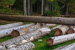 Bois De Chauffage Gratuit : troncs de bois de chauffage empil s t l charger icons ~ Melissatoandfro.com Idées de Décoration