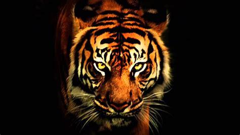 survivor eye   tiger traduzido p hd youtube