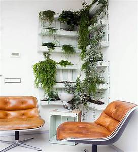 Hanging indoor plants and patio plants – hanging plants