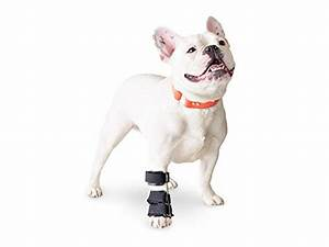 top 5 best carpal pad dog for sale 2017