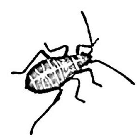 beetle clipart black and white beetle black and white clipart clipart suggest